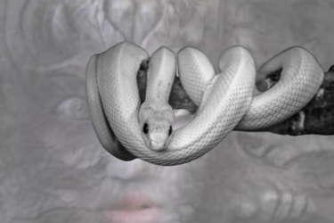 見えない存在のヘルプ~白蛇